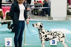 Apple California Herrmann's  Dalmatian -CACIB Bratislava 201