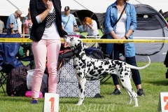 EssentialEditionSunsetDalmatian_Bolka2016